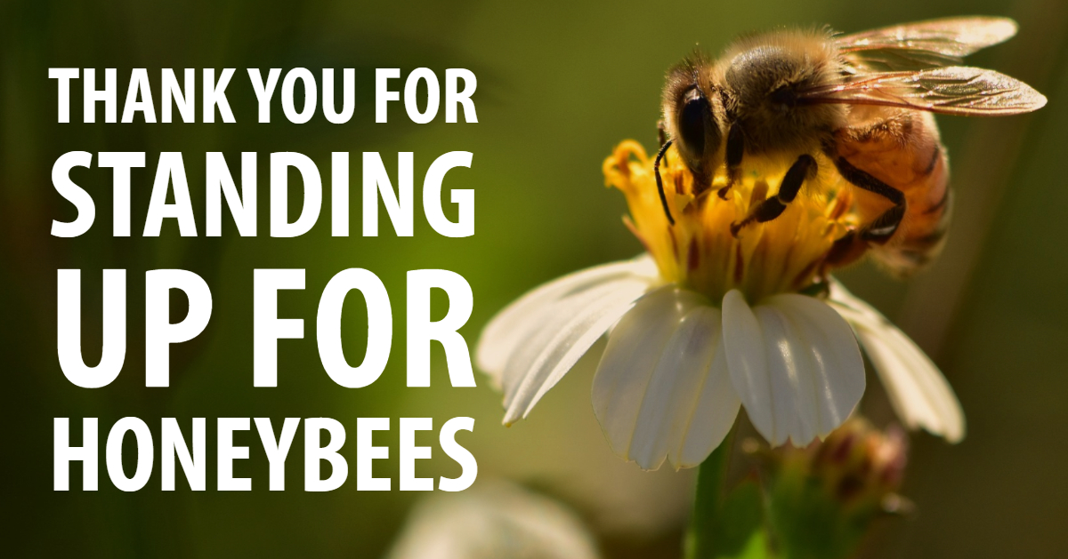 Thanks for standing up for honey bees