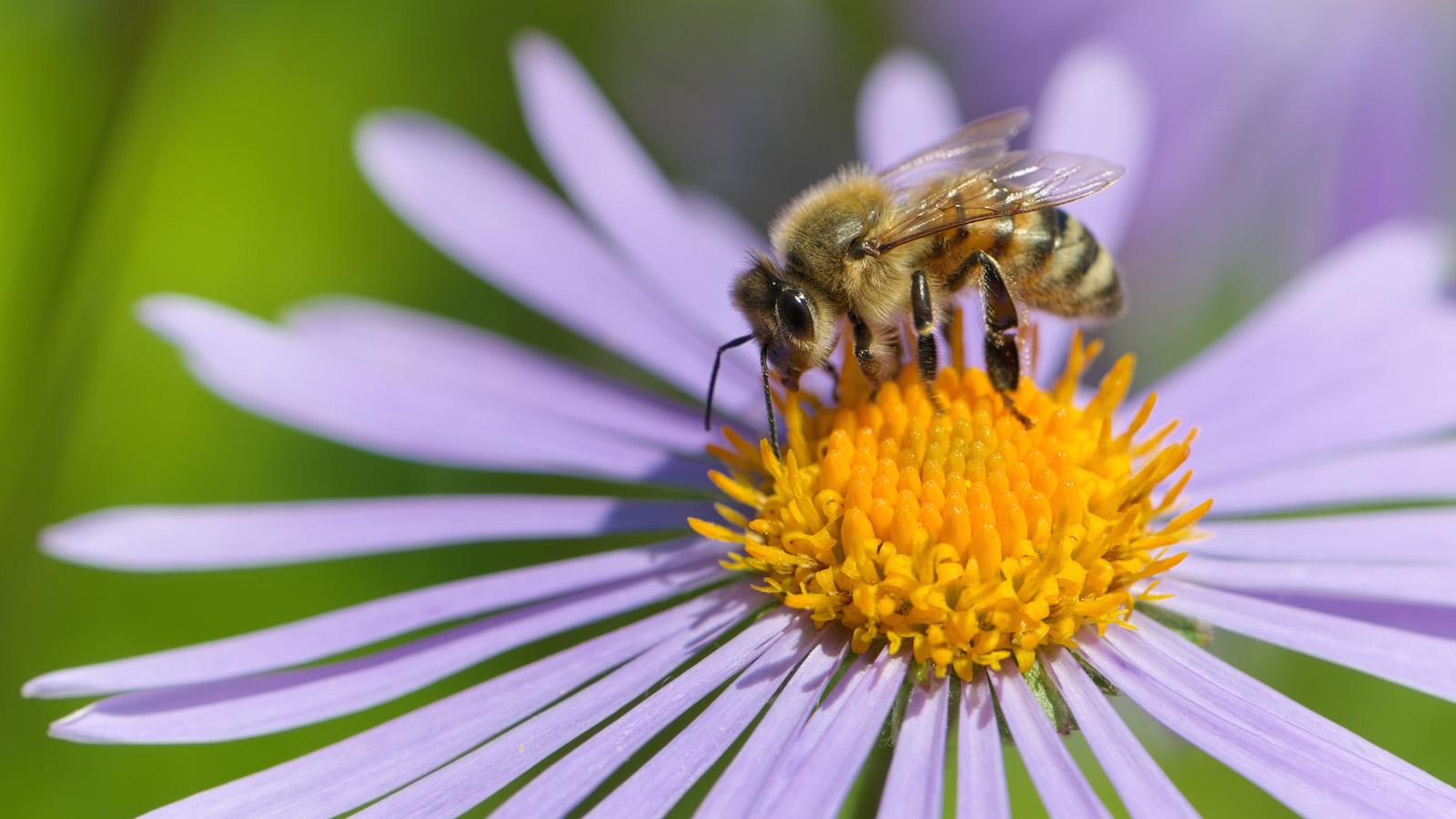 Bee on flower, webaction.org Photo